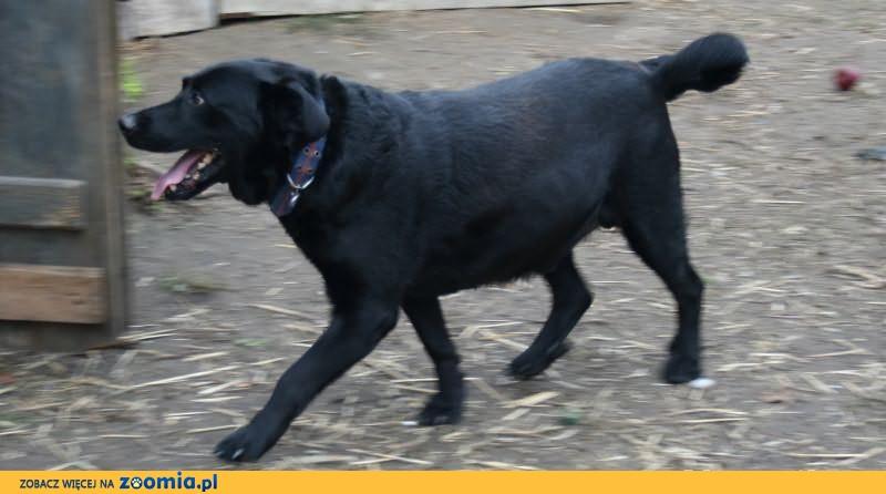 pies szuka człowieka