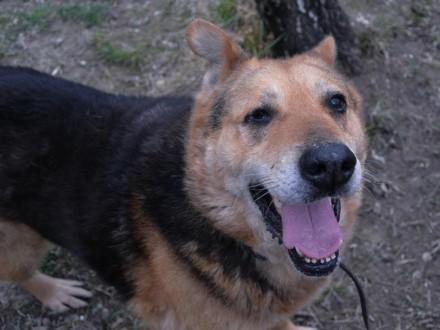 Zenuś-niechciany  bez szans na adopcje pies!