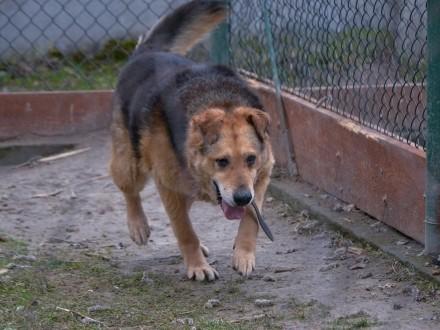 Zenuś-niechciany, bez szans na adopcje pies!