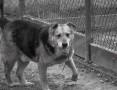 'Zenuś-niechciany, bez szans na adopcje pies!