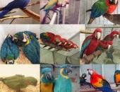 papugi dla dzieci i jaja papugowe