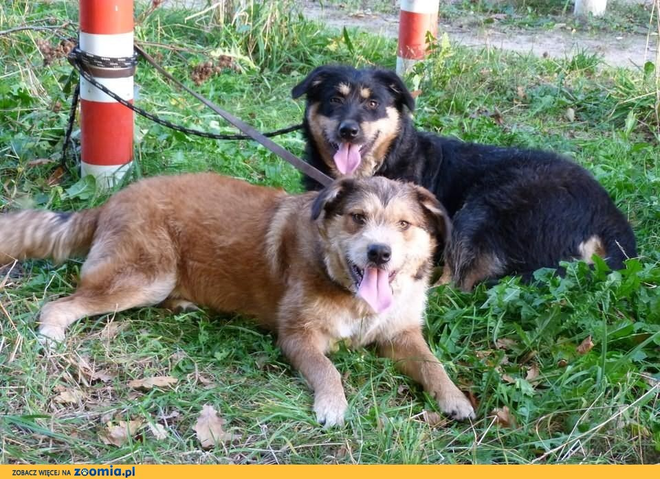 Młodziutkie sunie - Auris i Yaris do adopcji razem lub każda z osobna