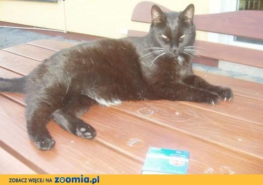 Zaginął czarny kot- W Ruścu pod Nadarzynem w okolicy ulicy Agrestowej ,  mazowieckie Warszawa