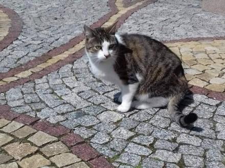 Zaginęła kotka Mila