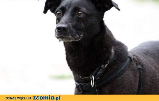 Idealny psi kompan dla dzieci - Marika,  mazowieckie Warszawa