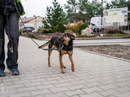 KRUKI - przyjaciel Człowieka na dom czeka!   mazowieckie Warszawa