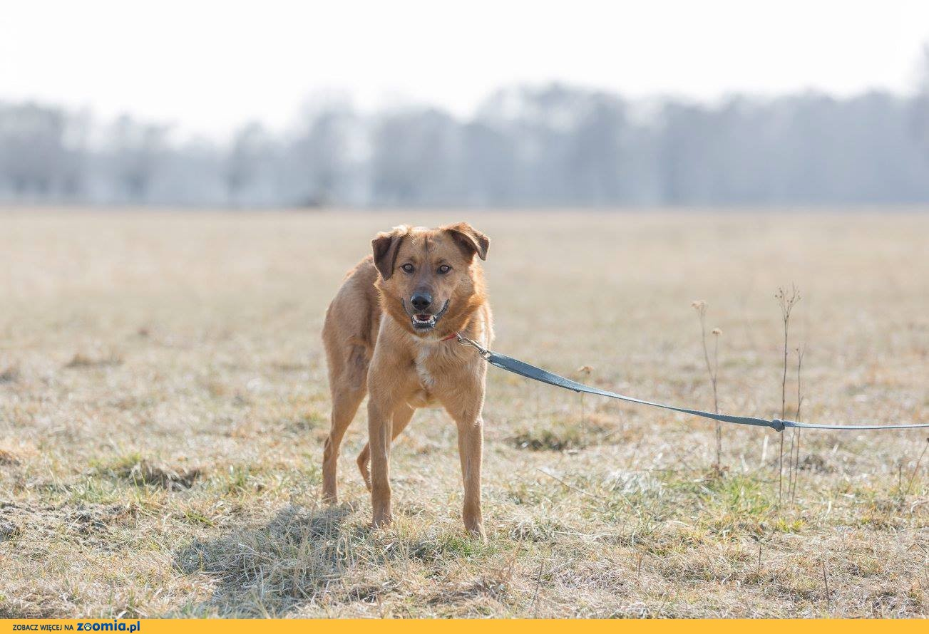 Sebik, wesoły, bardzo pozytywny psiak szuka domu!