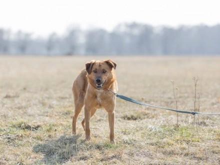Sebik  wesoły  bardzo pozytywny psiak szuka domu!