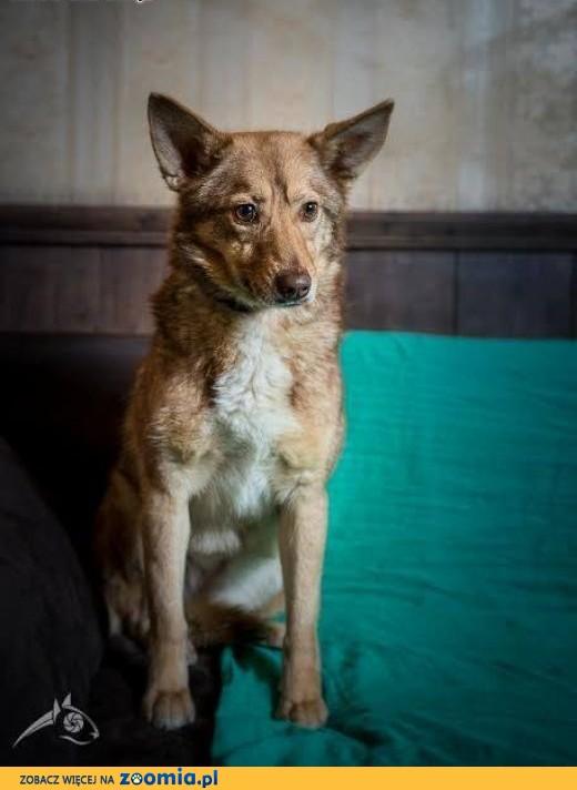 NOVA - pokochaj psa, co w sercu przyjaźń dla Ciebie ma:),  mazowieckie Warszawa