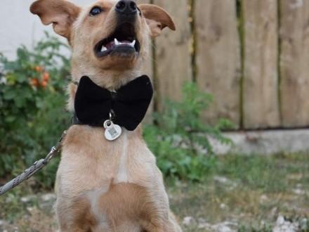 Wesoły  pozytywny Rubinek  psi dzieciak szuka domu!