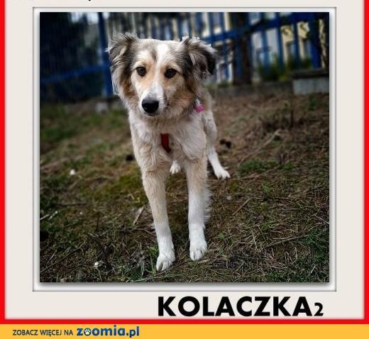 Mała,młodziutka,łagodna,delikatna,nieśmiała suczka KOLACZKA2.ADOPCJA,  dolnośląskie Wrocław