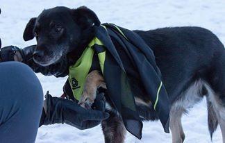 Łagodny,kochający ludzi pies szuka domu_