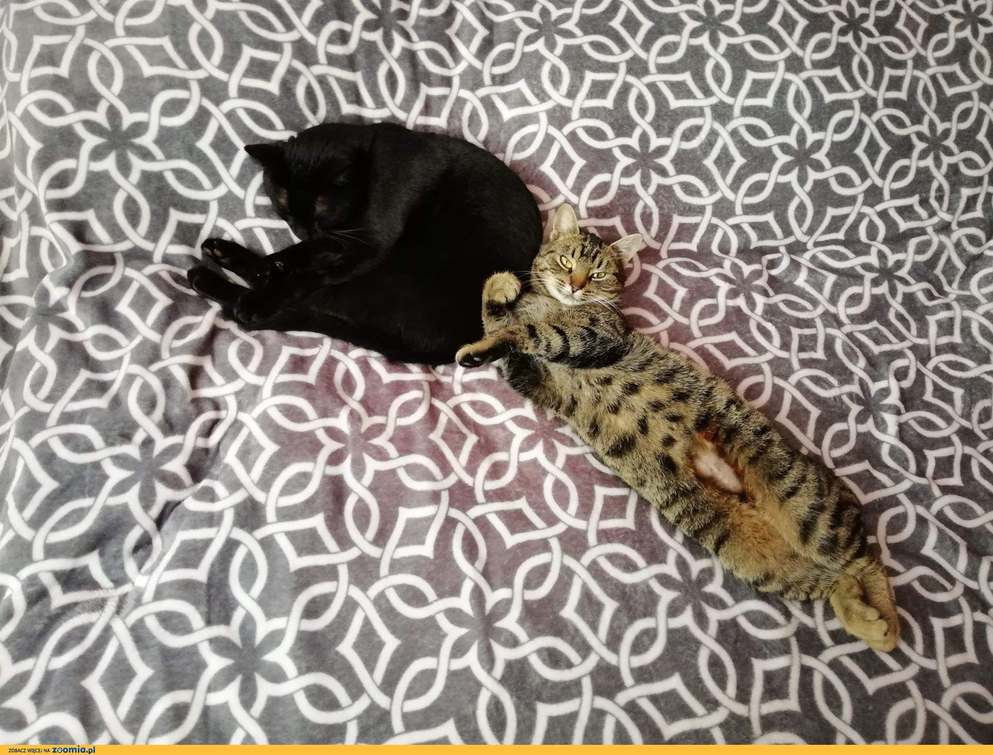 Lili, cudny przytulas, przyjazna koteczka do adopcji!
