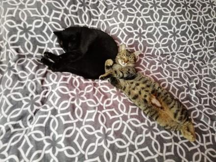 Lili  cudny przytulas  przyjazna koteczka do adopcji!