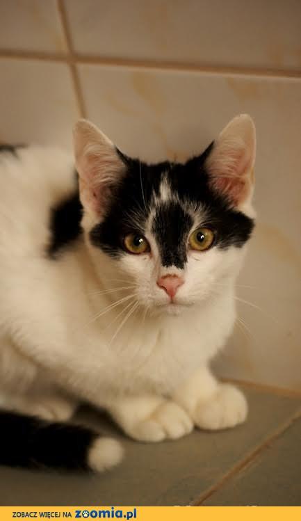 Młody śliczny kociak szuka domku