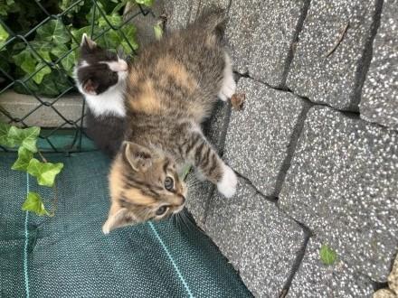 SŁODZIAKI DO ADOPCJI !!!!   Koty europejskie cała Polska