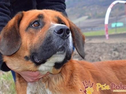 TYBERIUSZ-Wspaniały  dostojny  piękny psiak z padaczką szuka domu  adopcja