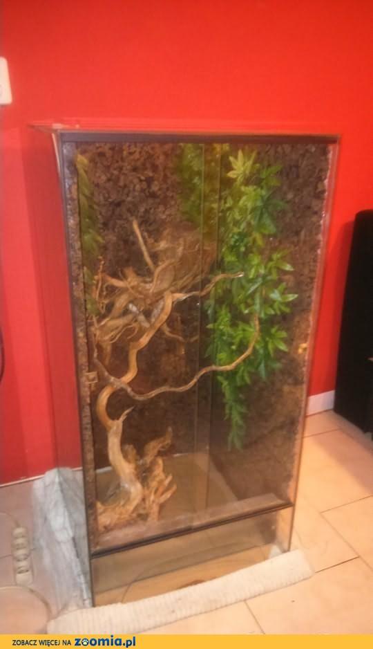 Sprzedam terrarium