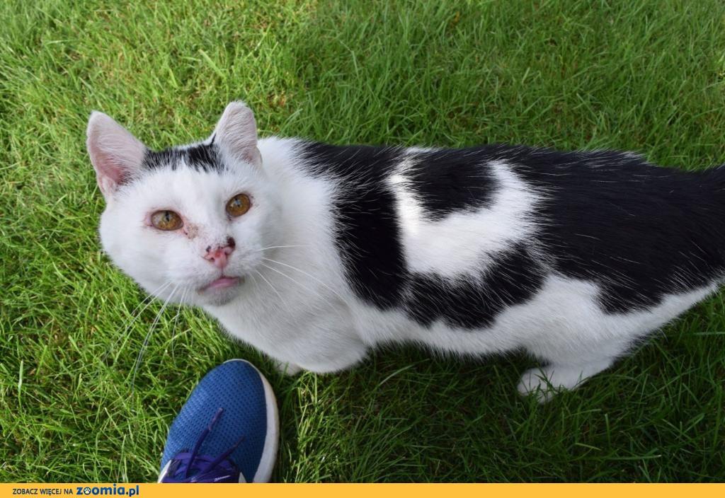 Filip, proludzki kot szuka domu na zawsze!