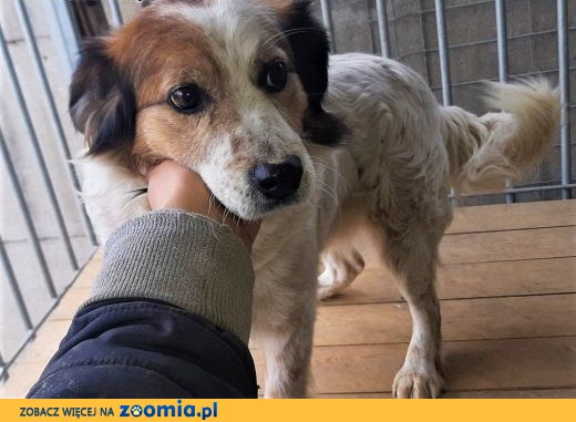 MISIO - zagubiony psiak, oddany po śmierci Pana za kraty! ADOPTUJ!,  mazowieckie Warszawa