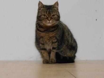 Mirelka - słodka kocia kuleczka szuka domu   warmińsko-mazurskie Olsztyn