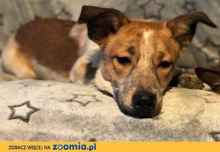 9 miesięczne, małe, urocze szczeniaki wyrzucone na śmietnik do adopcji,  małopolskie Kraków