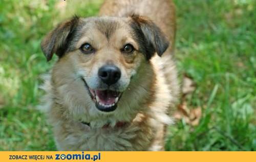 Misio i Lena, wspaniale zżyci - podaruj im wspólny dom!,  Kundelki cała Polska