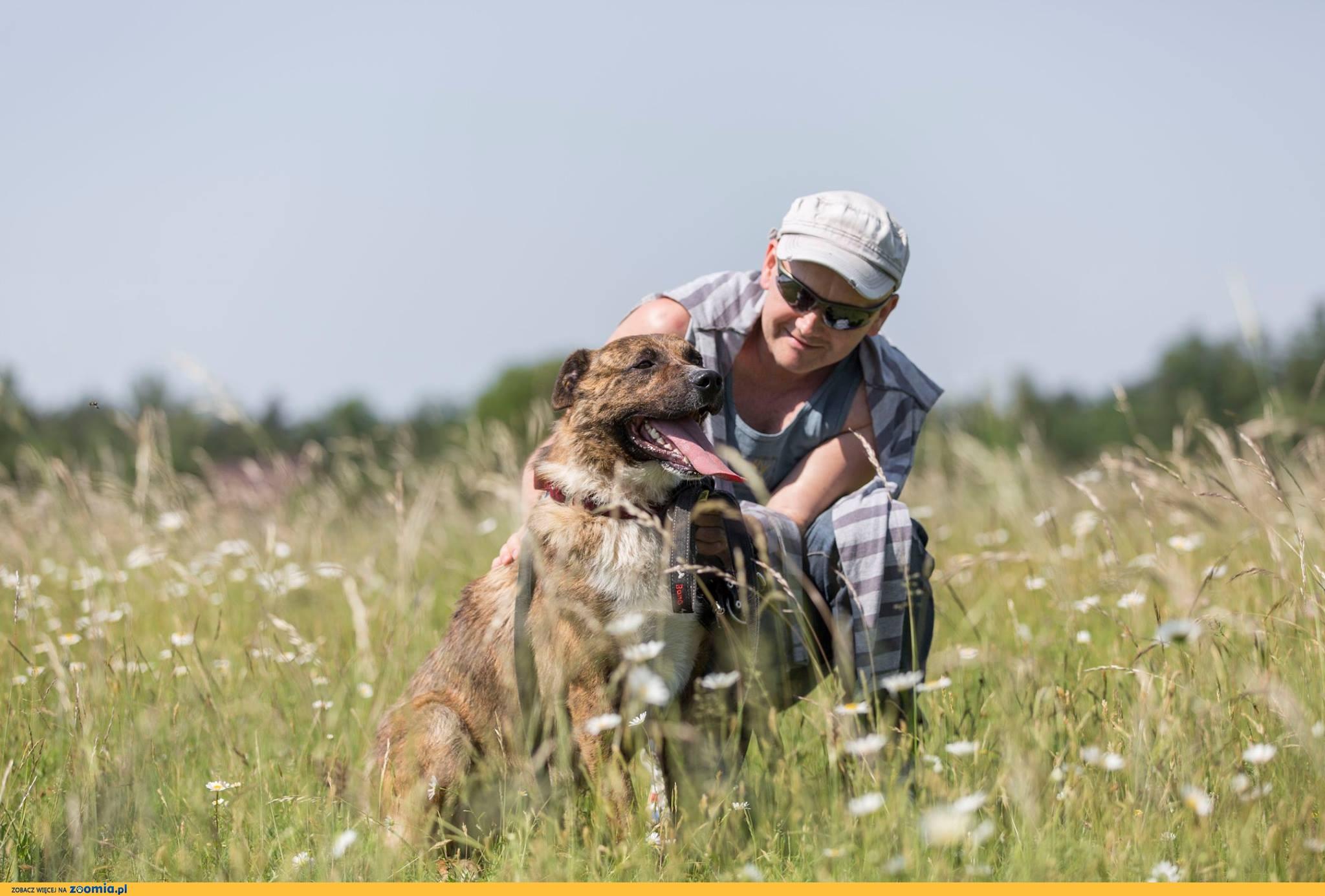 Pogodny, niezwykle przyjazny Teri, cudny psiak do adopcji!