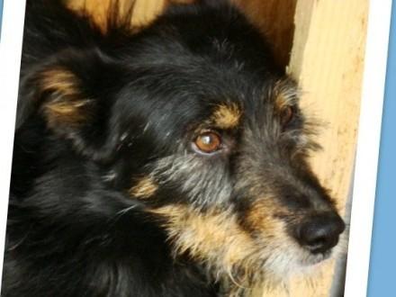 Terierkowaty OKI 2  radosny przyjazny łagodny psiak _Adopcja