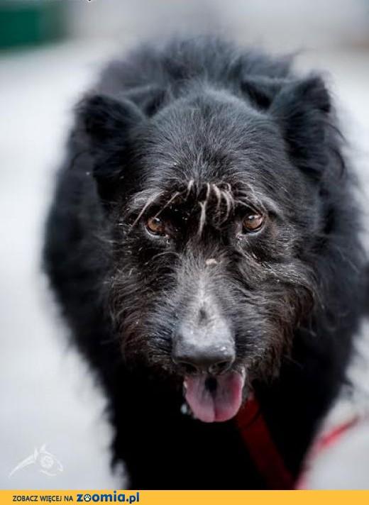 KAJ - pies na każdy dzień, na zawsze, na szczęście!,  lubelskie Lublin