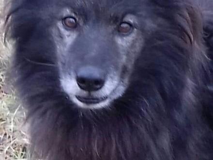 Opowiem Wam o psie  który nazywa się LIS   mazowieckie Warszawa
