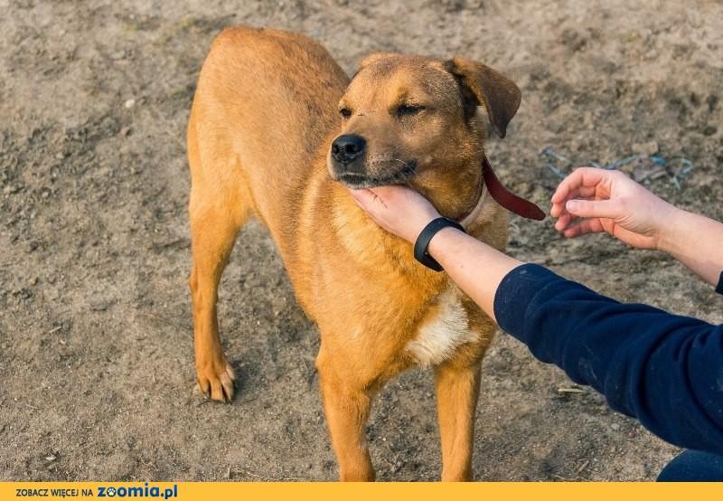 Alfredo, cudowny pies, grzeczny, posłuszny i niekonfliktowy