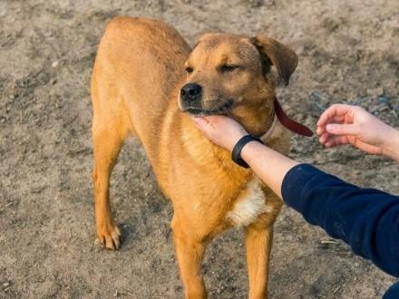 Alfredo  cudowny pies  grzeczny  posłuszny i niekonfliktowy