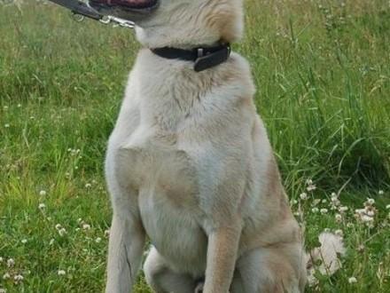 Diego - aktywny pies szuka aktywnego domu   Kundelki cała Polska