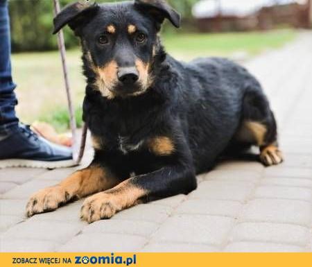 JUNIOR - młody, delikatny psiak prosi o szansę i dom!,  mazowieckie Warszawa