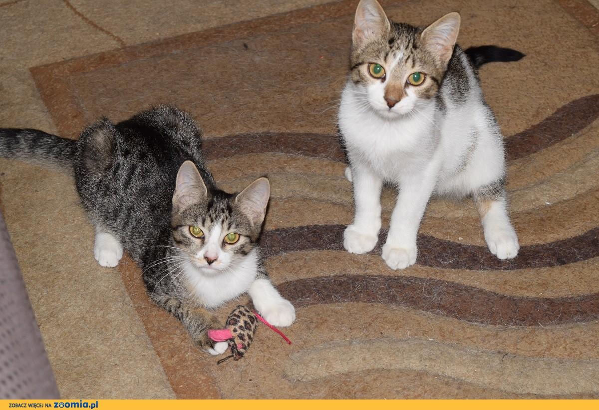Fisia i Gapcio, koci duet, KOCIĘTA do adopcji