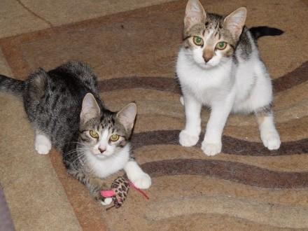 Fisia i Gapcio  koci duet  KOCIĘTA do adopcji