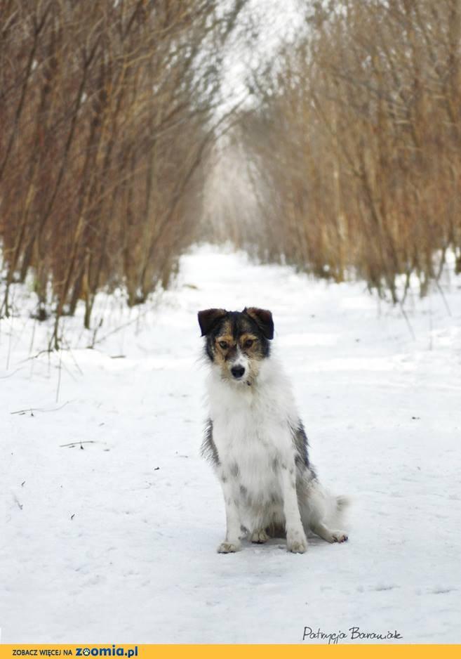 Sid cudny terierkowaty psiak czeka w schronisku Zgierz