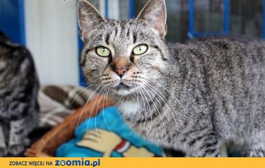 Piękna kotka Fiona szuka domu!,  dolnośląskie Wrocław