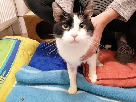 kot do adopcji    dolnośląskie Świdnica