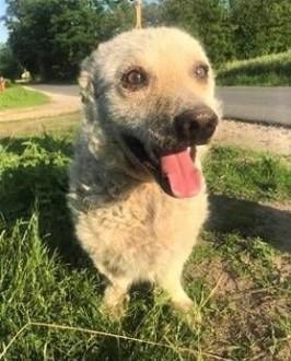 ALLADYN - mały psiak uratowany z Radys  błaga o dom!   małopolskie Kraków