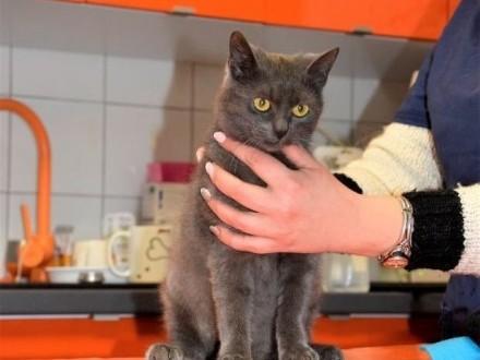 BORYSEK - 5 miesięczny okaleczony kotek  czy ktoś mu da dom   Koty pospolite cała Polska