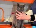 BORYSEK - 5 miesięczny okaleczony kotek, czy ktoś mu da dom,  Koty pospolite cała Polska