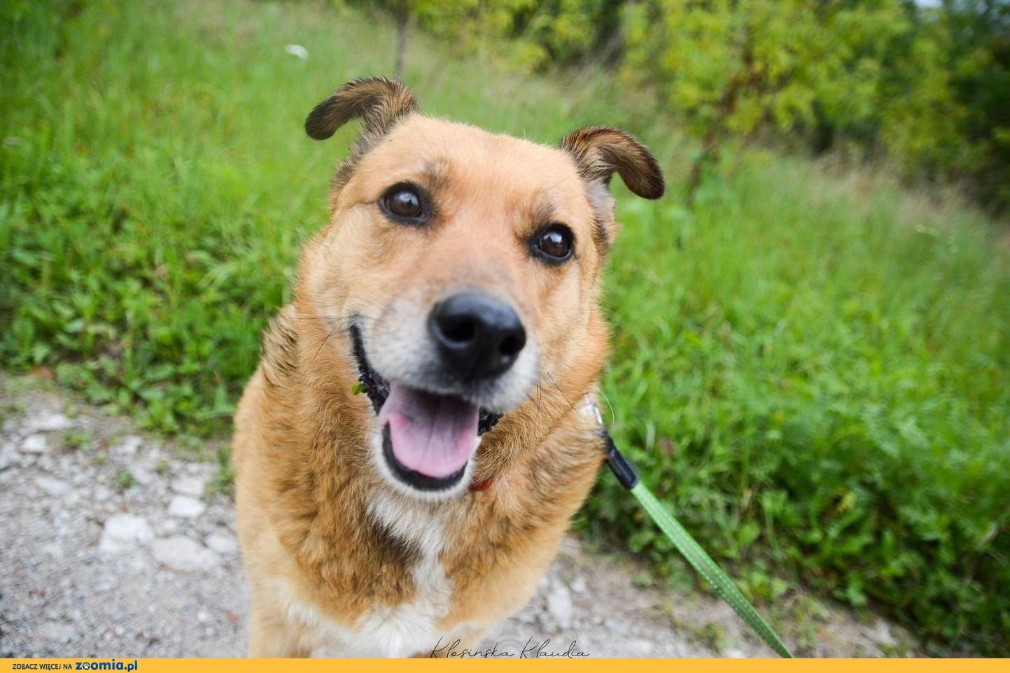 Spokojna i opanowana Astra, przyjazny rudzielec do adopcji!