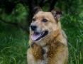 'Spokojna i opanowana Astra, przyjazny rudzielec do adopcji!