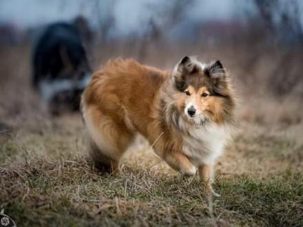 Majestatyczna Lamia taka słodka psia dama