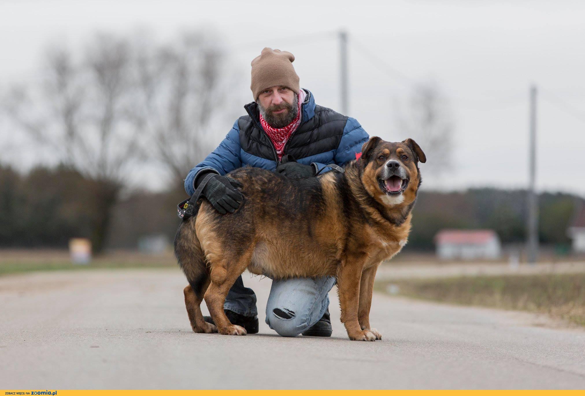 Czołg, masywny, energiczny pies szuka domu!