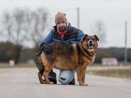 Czołg  masywny  energiczny pies szuka domu!