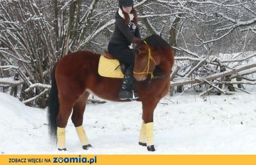 Współdzierżawa konia ,  kujawsko-pomorskie Bydgoszcz