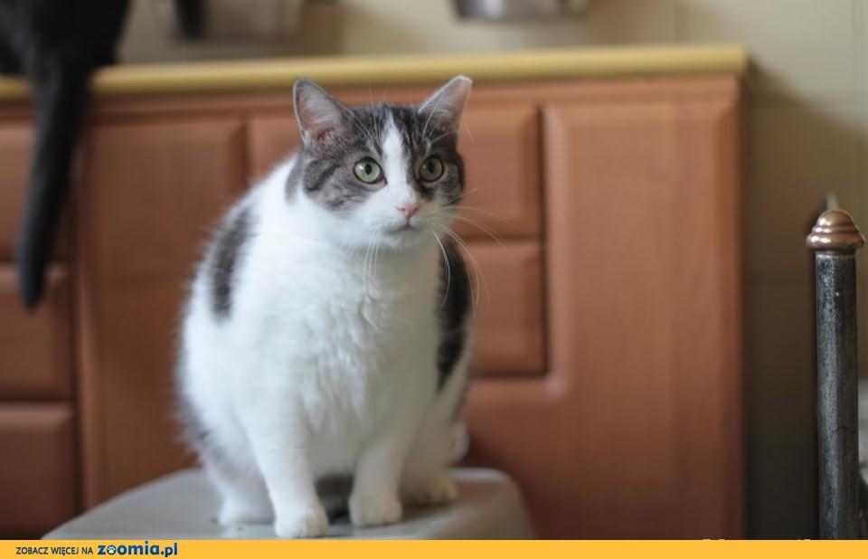 Zuzka - kotka o kształcie doskonałym ;)